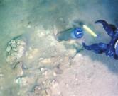 海水/沉积物检测