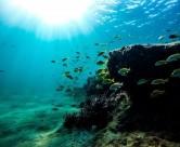 海洋生物检测介绍
