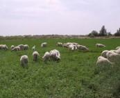 畜牧业产品